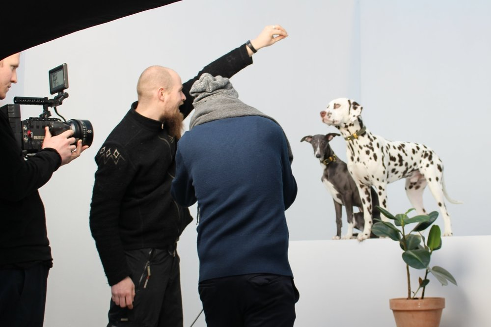Two of our models, Baron and Jax in action in front of the two cameras. Jax's owner David is doing a great job getting their attention with some help from a mini sausage.