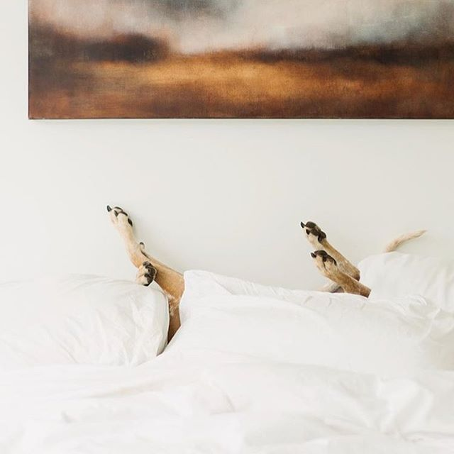 Sunday mood 📷by @thiswildidea
