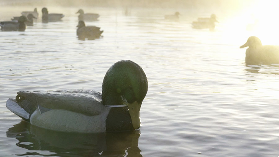 hero-outdoor-products-hero-decoys-marsh-series-mallard-preener-in-pond.jpg