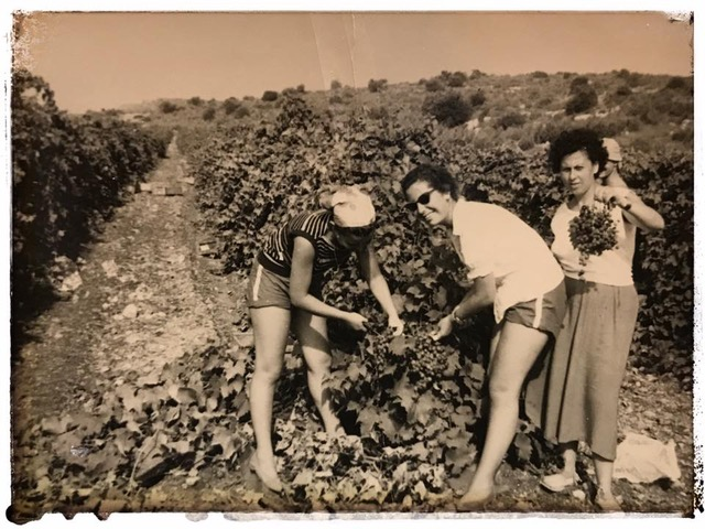 Kathy and friends picking grapes on a kibbutz in Israel.