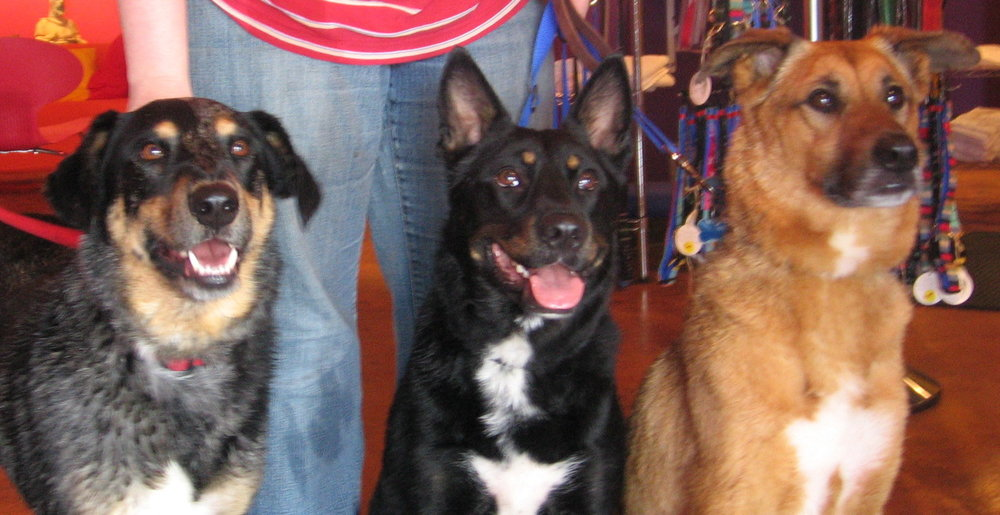 Dirty dawgs cropped jrjg solutioingenieria Images
