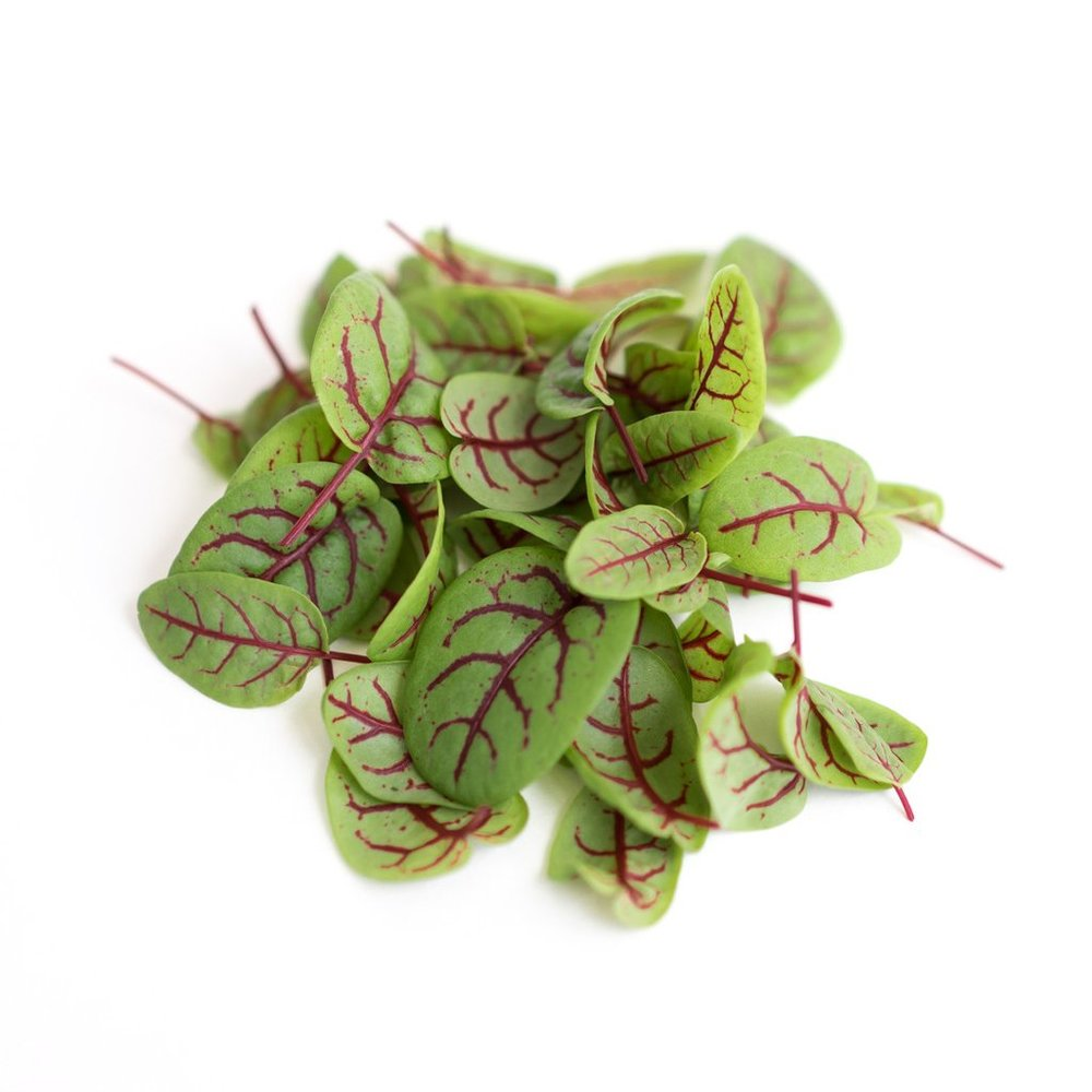 Red Viened Sorrel.jpg