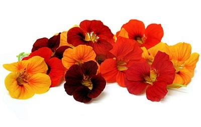 Nasturtium Flower.jpg