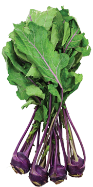 premature purple kohlrabi.png