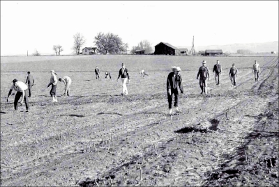 George Peabody Asparagus Farm (around 1956)