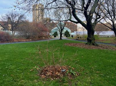 giardino-botanico.jpg