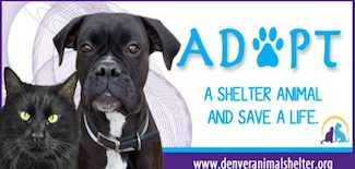 Denver-Pro-Pet-Sitting-Adopt