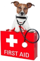 Denver Pro Pet Sitting First Aid