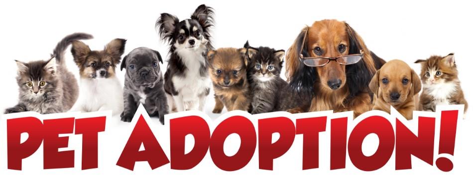 pet adoption.jpg