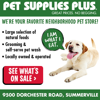 Lowcountry Dog Rescue Spotlights are proudly sponsored by Pet Supplies Plus