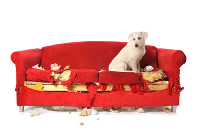 Dog_ripped_up_sofa.png