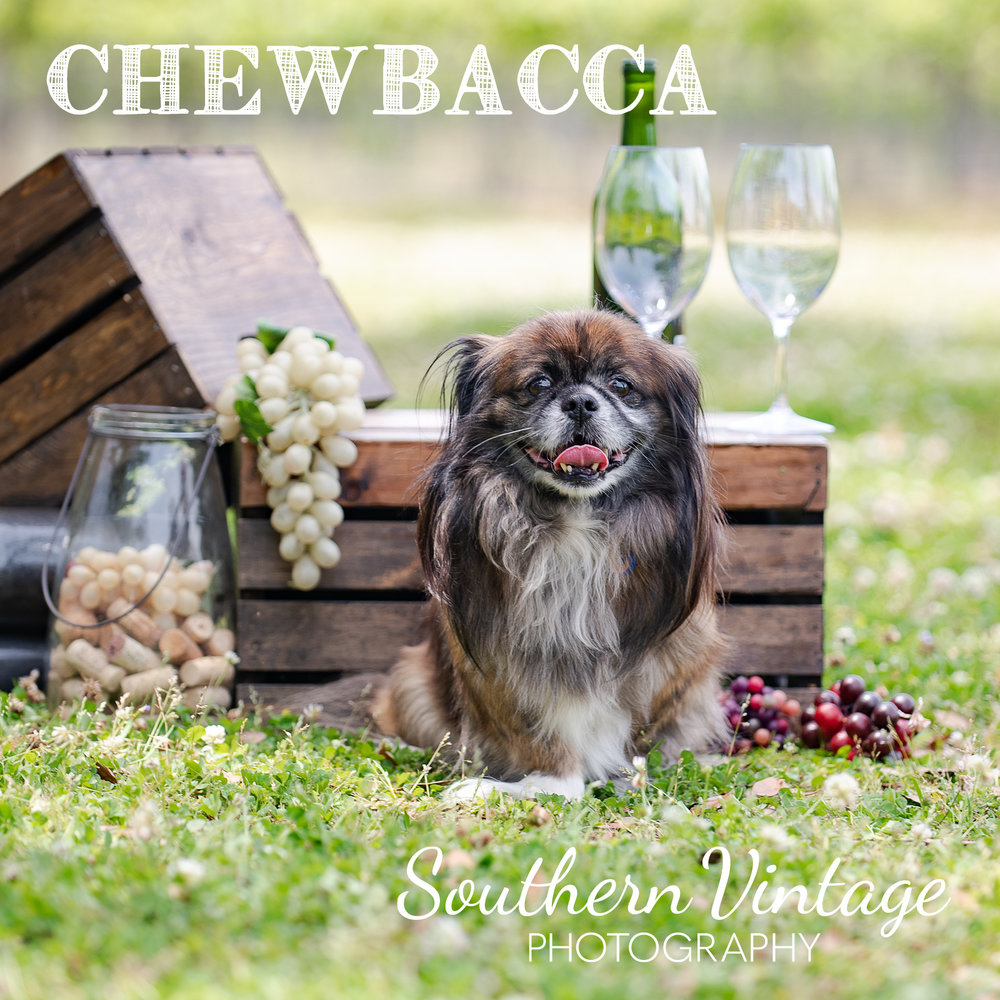 09_Chewbacca.jpg