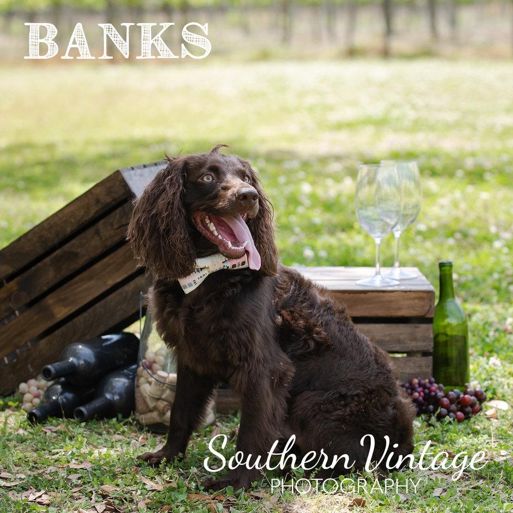 15_Banks.jpg