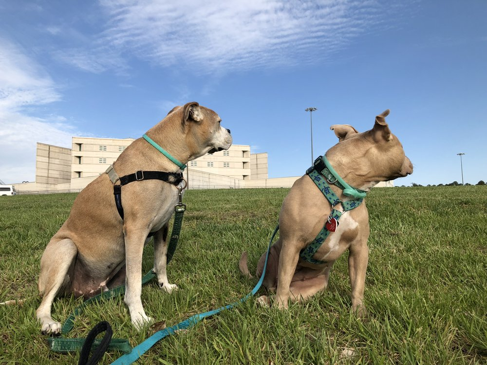 Therapy Dogs Visiting Inmates