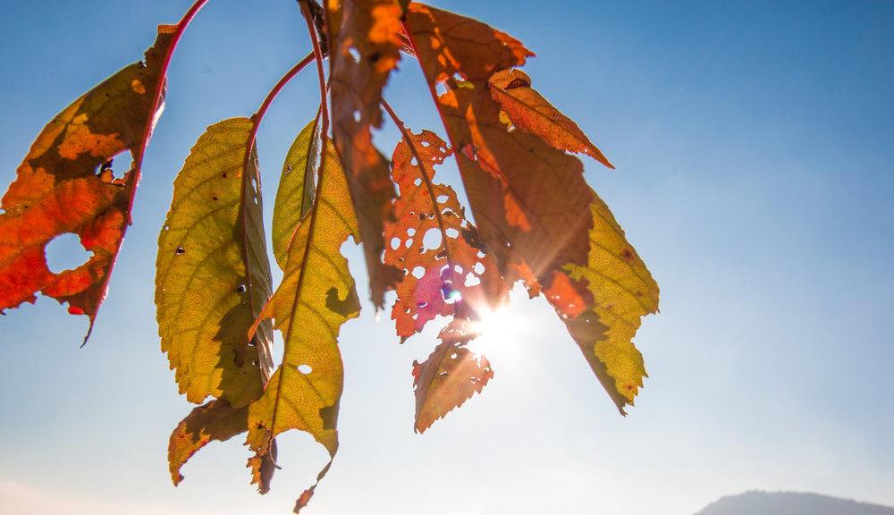 zombie_leaves___autumn_death_by_3valerio-dak20cu.jpg