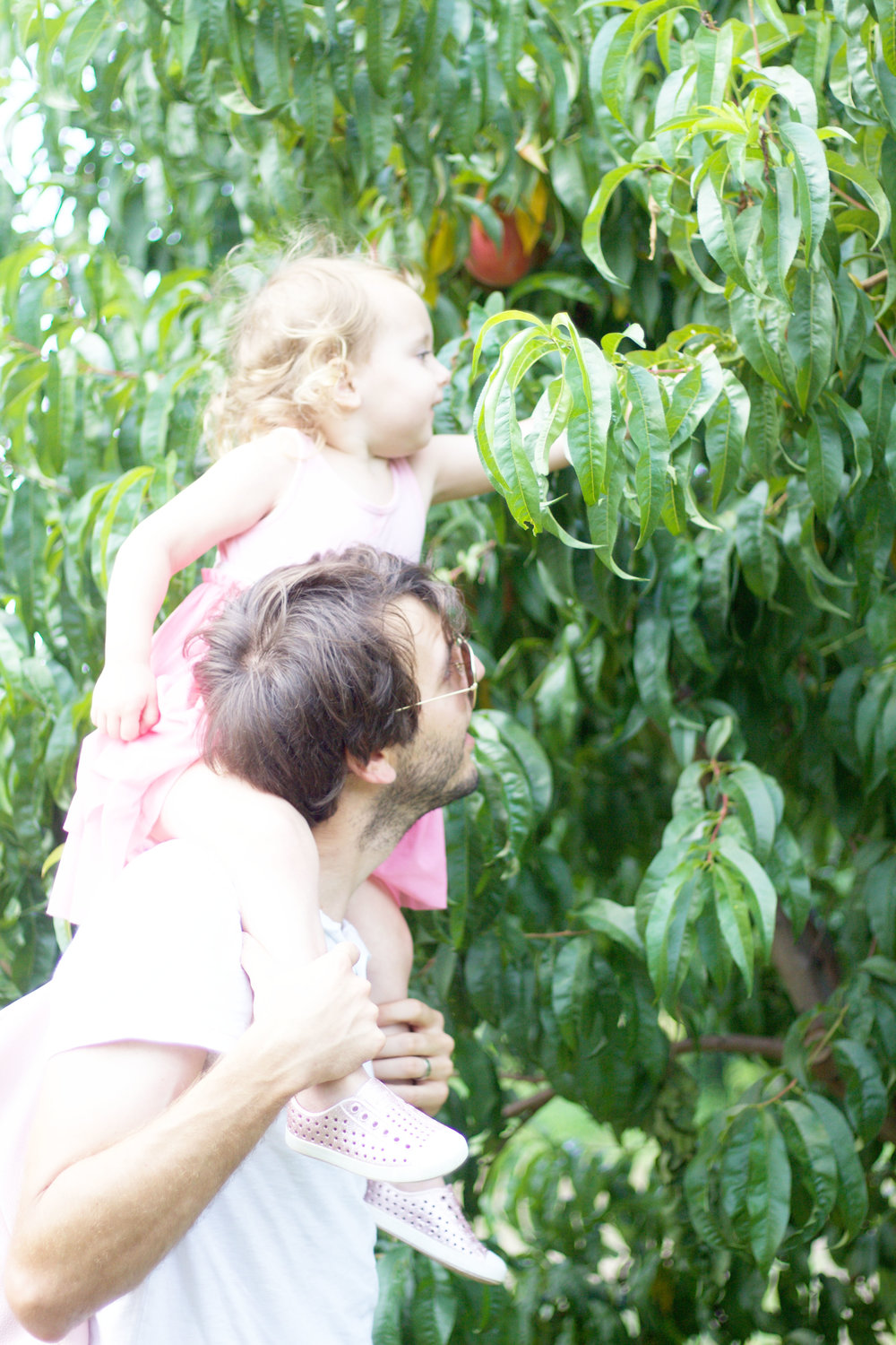 Family Peach Picking So Dressed Up