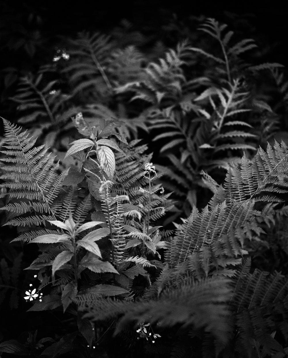 Bailey-Q-Photo-Landscape-006.jpg