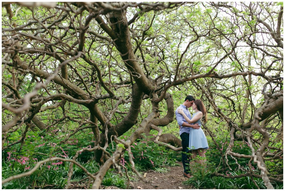 Arnold-Arboretum-Engagement-Boston-Wedding-Photographer-Bailey-Q-Photo-017.jpg