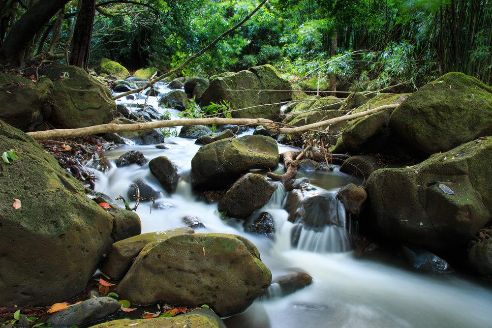 creek (1 of 1) copy.jpg