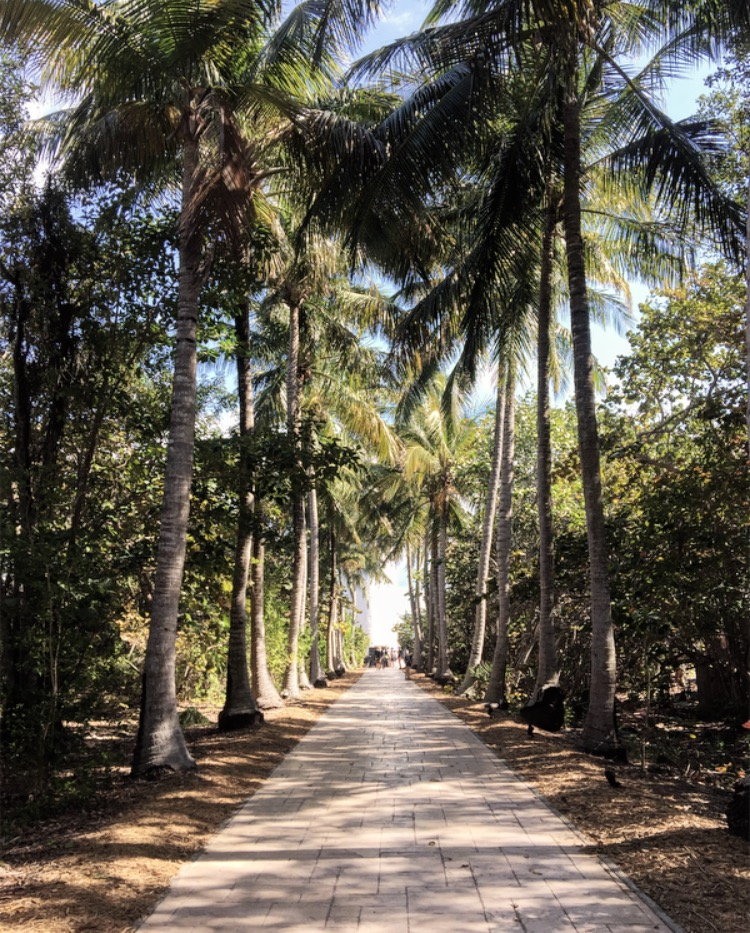 Coconut Palm lined walkway to the Cape Florida Lighthouse.