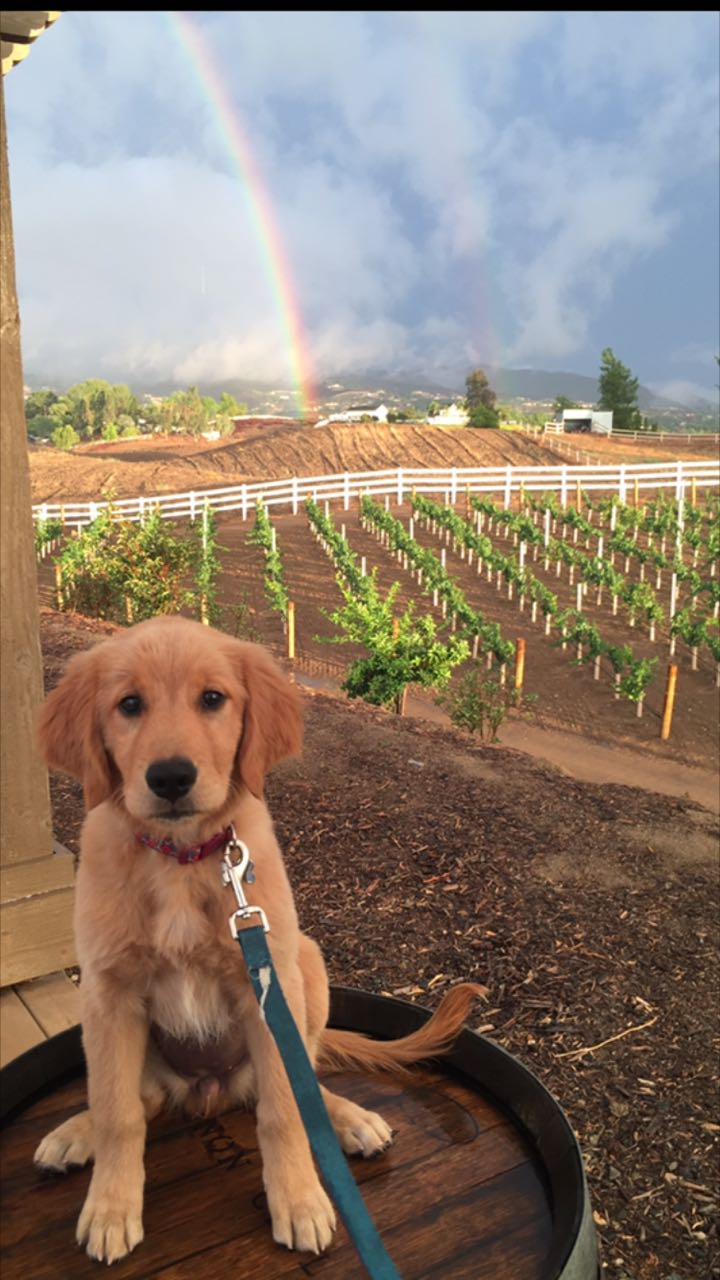 No visual effects needED!who doesn't love puppies, vineyards and rainbows!!