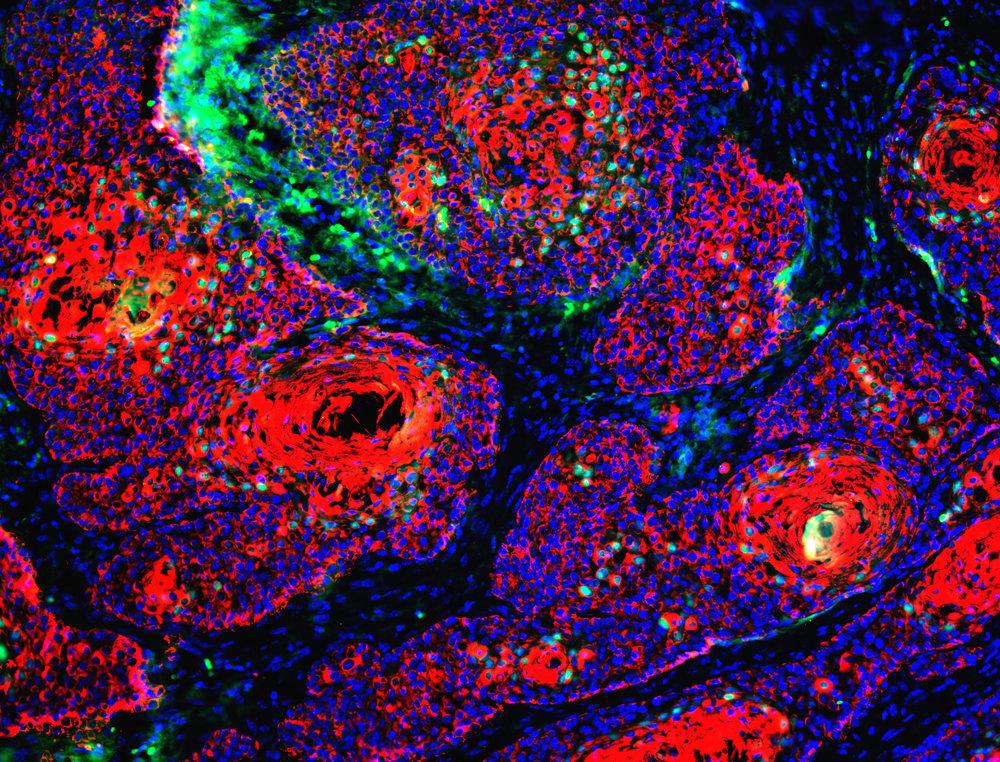 via  NIH Image Gallery  (Creative Commons License)