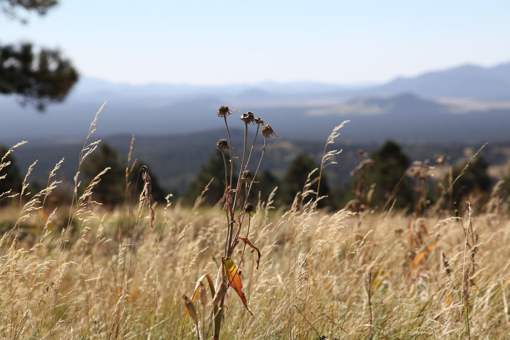 Snowbowl, Flagstaff
