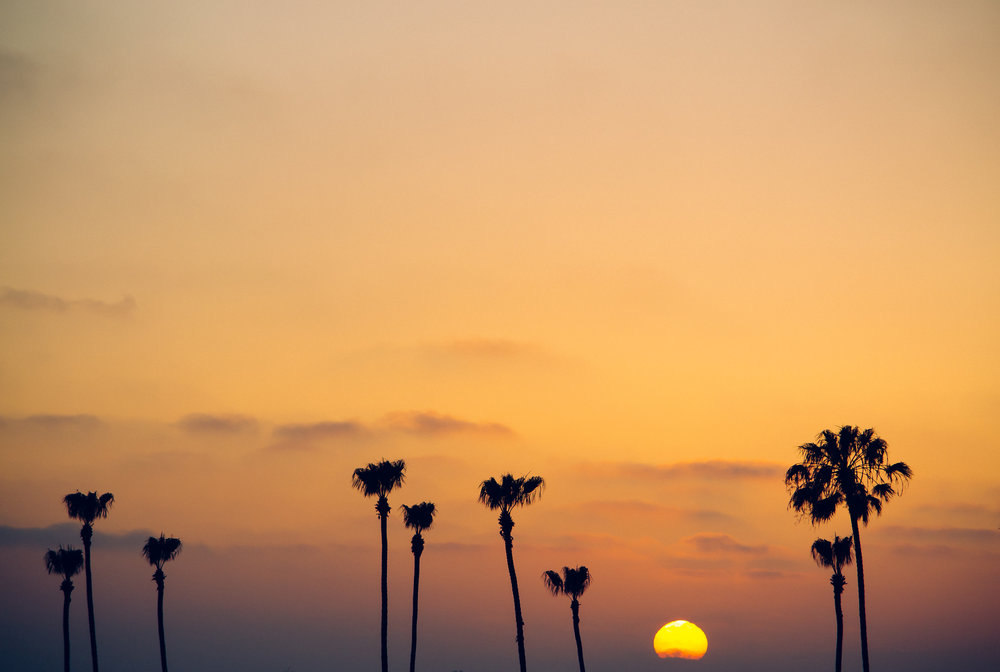 Matt-Sampson-Photography-San-Diego-California-La-Jolla-palm-trees-sunset-Beach-Fading-sun.jpg