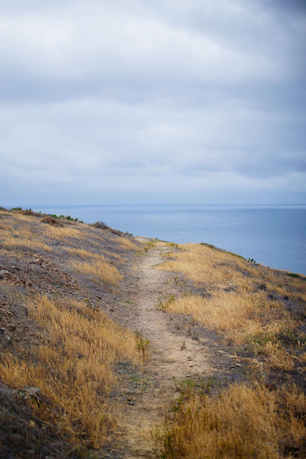 Matt-Sampson-Photography-catalina-island-California-golden-path.jpg