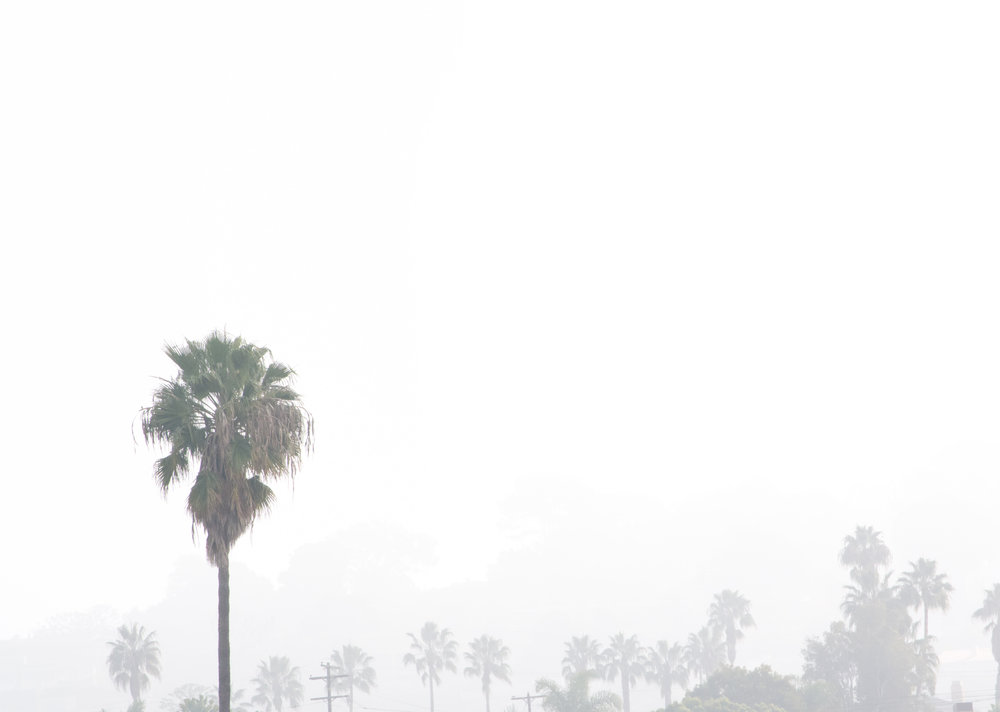 Matt-Sampson-Photography-San-Diego-California-La-Jolla-Beach-palm-trees-barely-visible.jpg
