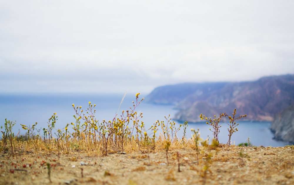 Matt-Sampson-Photography-catalina-island-California-visuals-of-life.jpg