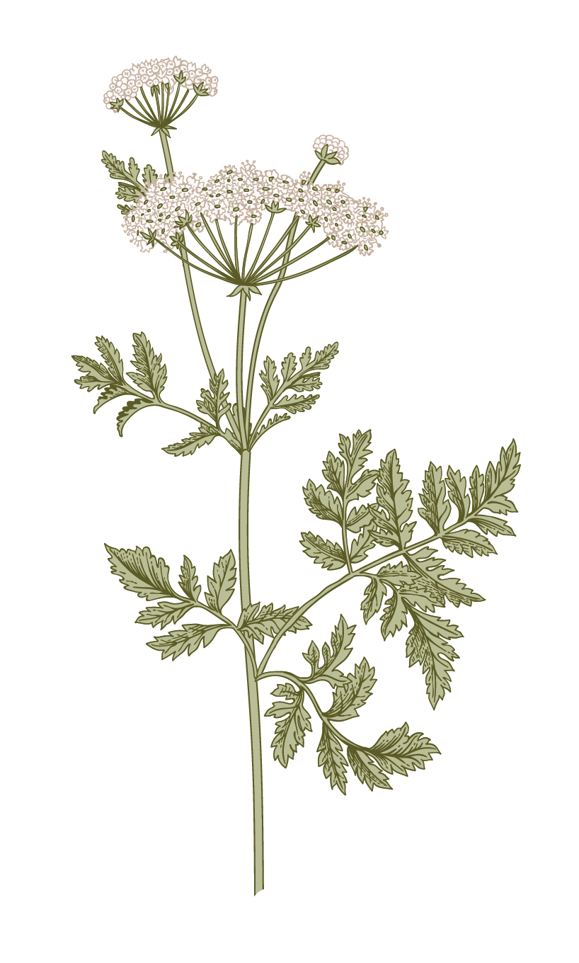 Individual Flowers-15 (1).png