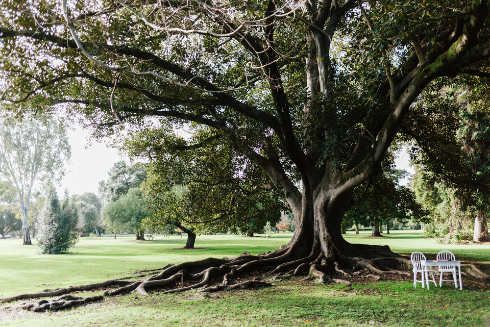 Adelaide Botanic Park Elopement 021.jpg