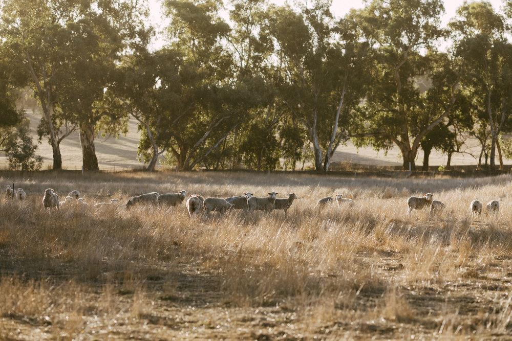 Adelaide Hills Elopement 39.jpg