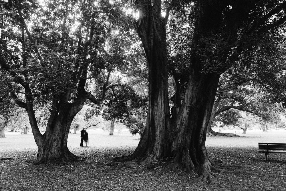 Adelaide Botanic Park Elopement 049.jpg