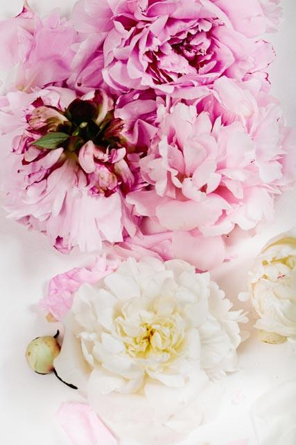 Blush-Image21.jpg