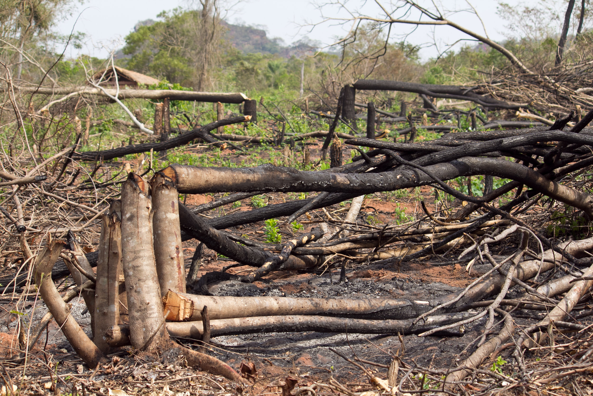 deforastation paraguay