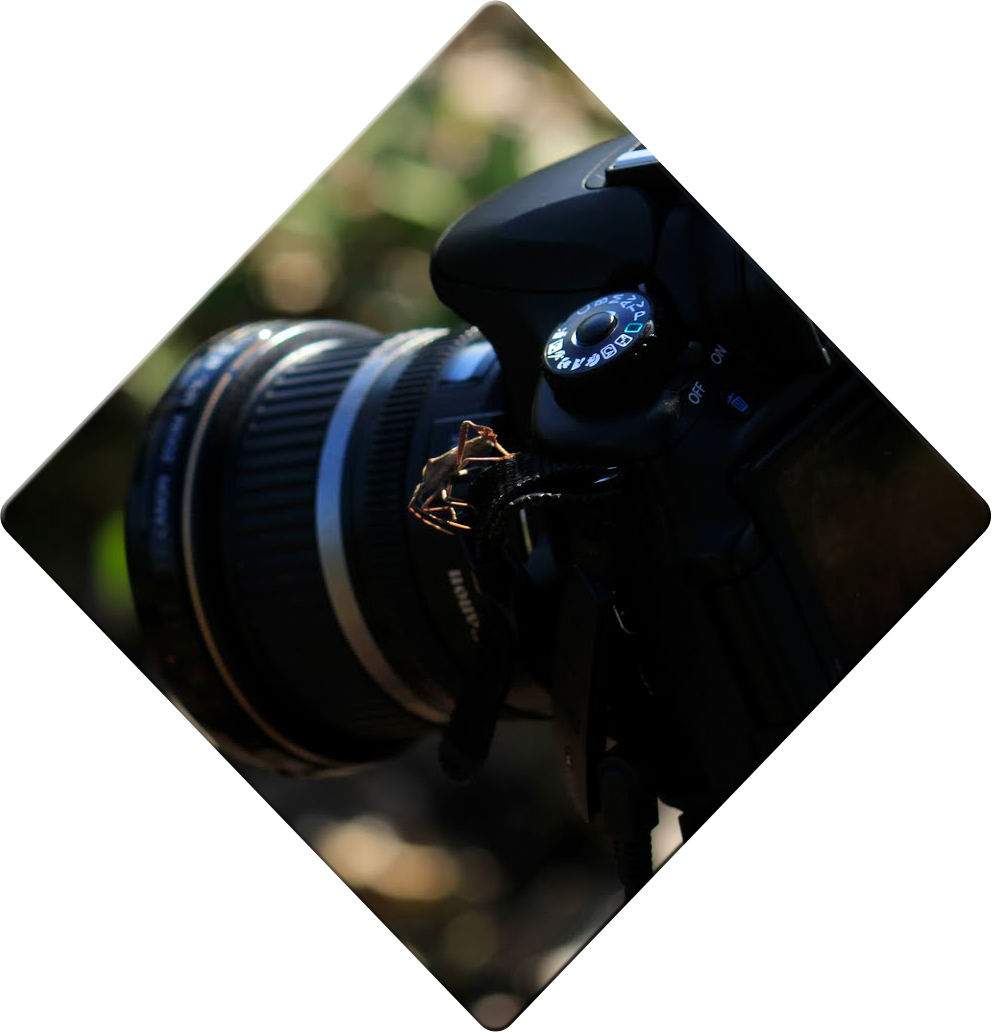 05 bug on camera