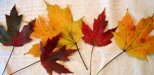 preserve-leaves-glycerin-1.jpg