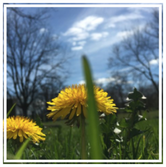DandeLion Essentials, LLC