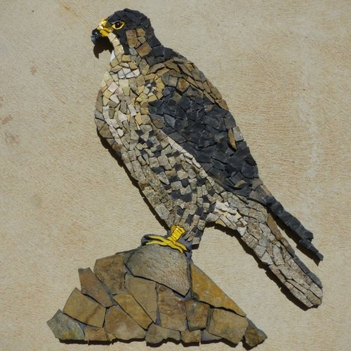 Peregrine+Falcon+sitting+KJ+KW.jpg