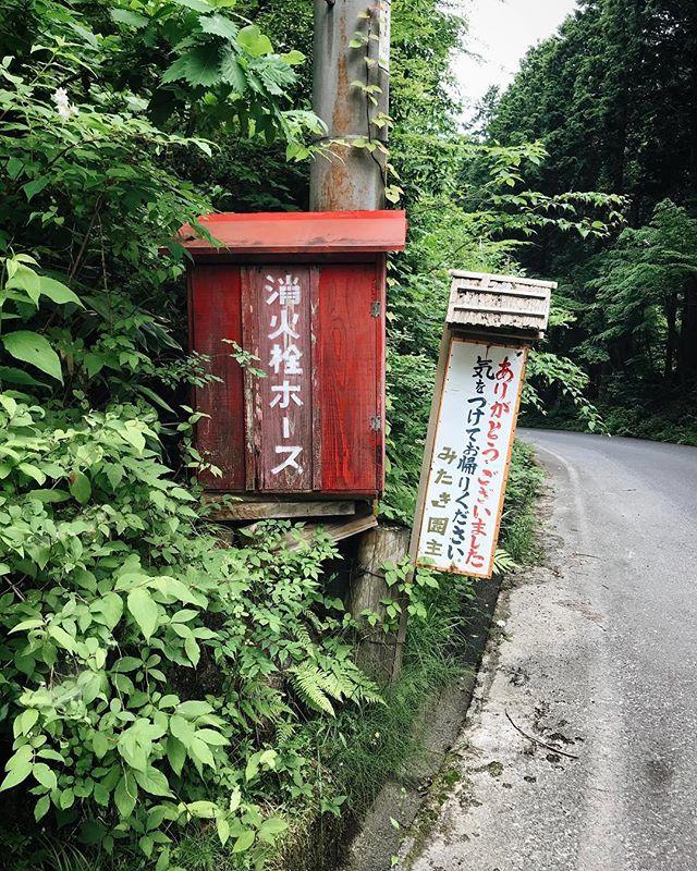 Love all that green #nature #green #tottori #japan #mitakien #みたき園 #鳥取 #智頭