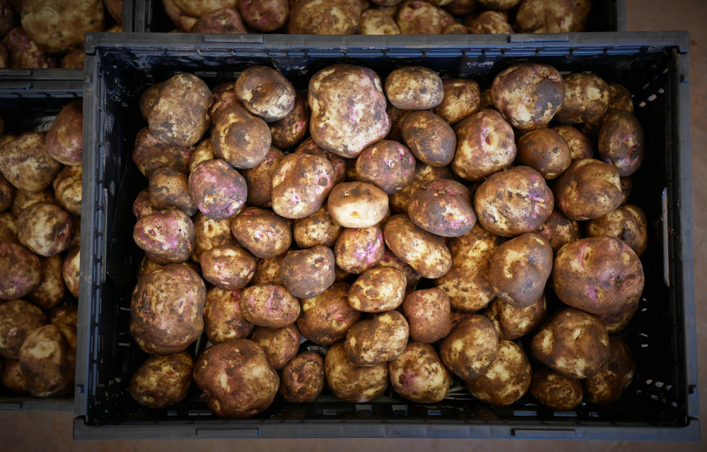 TASSIE POTATOES STRAIGHT FROM THE GROUND.