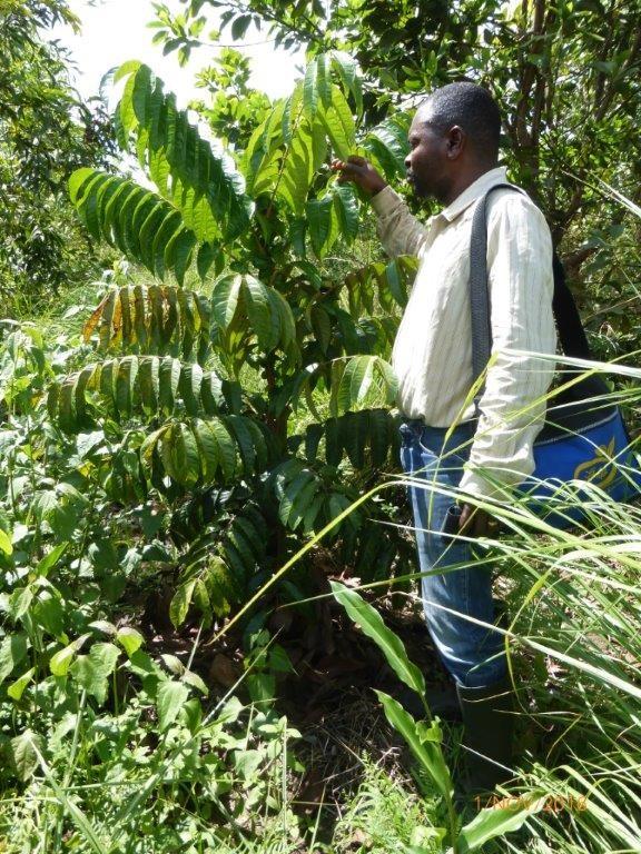 Serge est très fier de «ses » 4000 arbres fruitiers qu'il entretient avec soin depuis 2 ans
