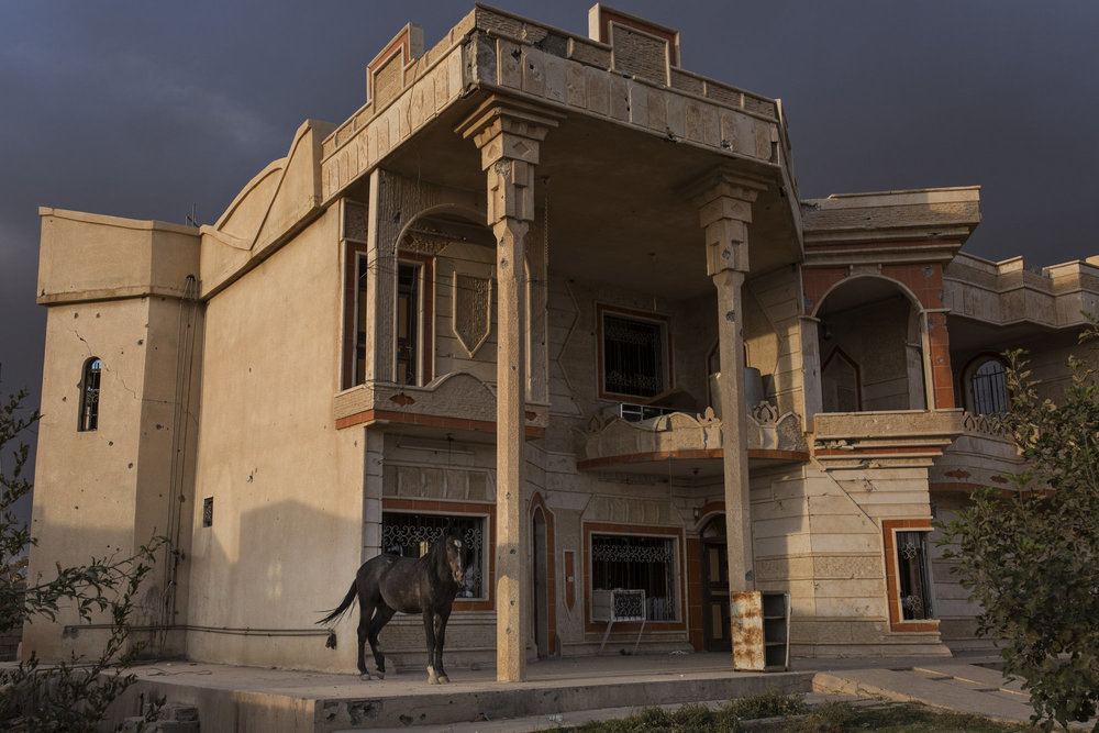 A horse stands by an abandoned house in a village retaken from Islamic State forces.