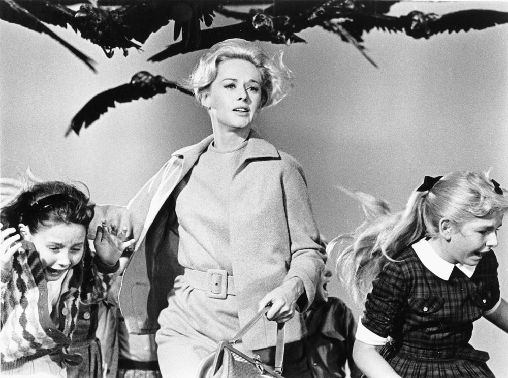 Alfred Hitchcock's  Birds