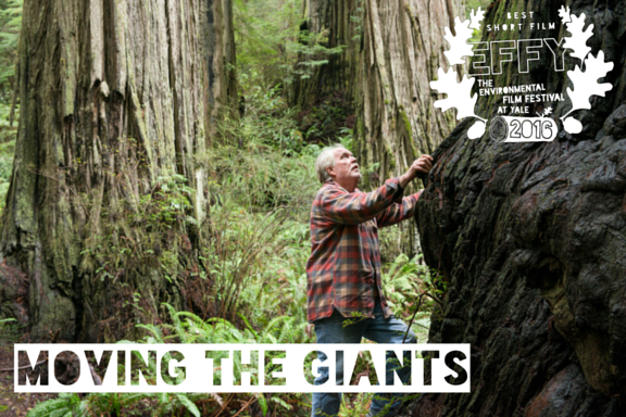 "2016 Best Short Film: Moving the Giants Directed by Michael Ramsey Short Film In 1991, arborist David Milarch had a near-death experience that inspired a personal quest to reforest our planet. He would harvest the genetics of the world's oldest trees, initiate tree-planting efforts to combat climate change, and help restore the planet's health. Remarkably, he has been doing just that. Moving the Giants tells David's story, as he helps California coastal redwoods migrate northward to survive climate changes that threaten their current habitat. His is one path to promote ""treequestration,"" a mass movement to use one of nature's most prolific methods to remove carbon dioxide from the atmosphere and reduce the amount of future climate change. TRAILER"
