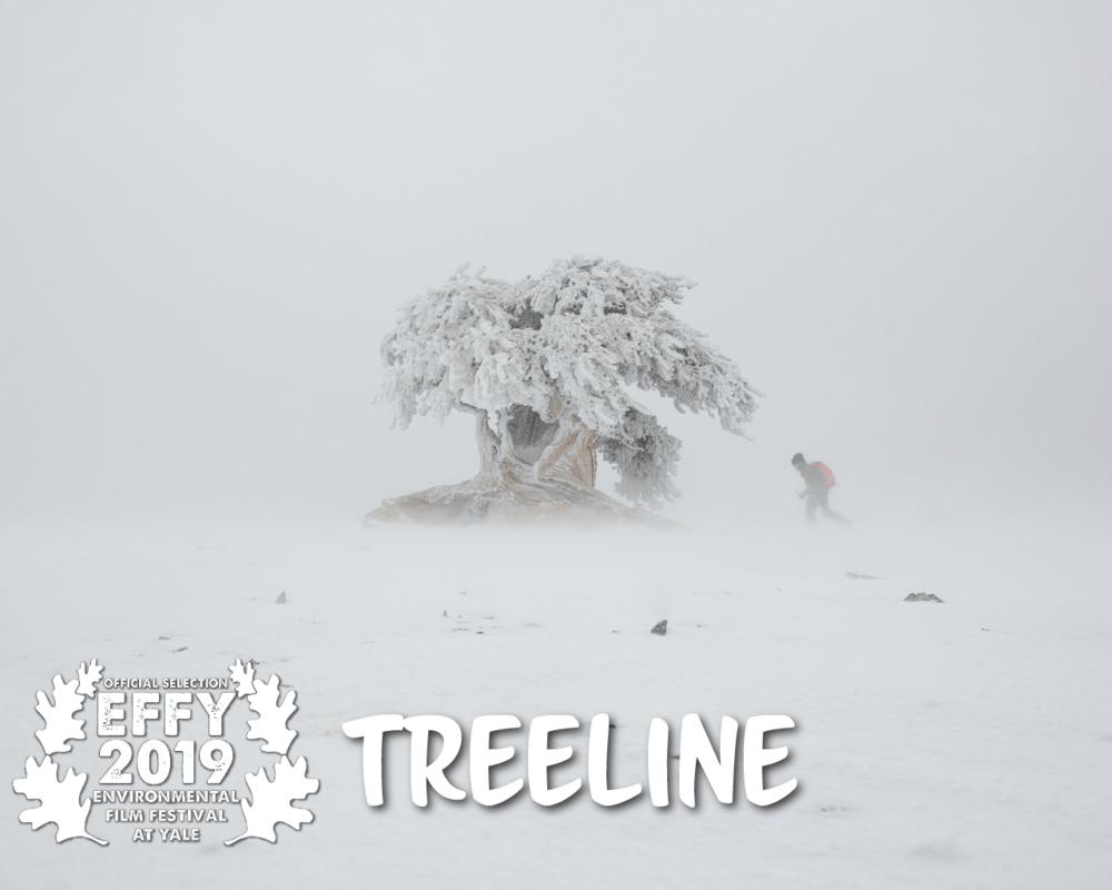 Treeline_Laurel.png