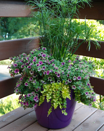 your planters beautiful steps pots garden spring hawthornes for planning easy of house containers flowers to