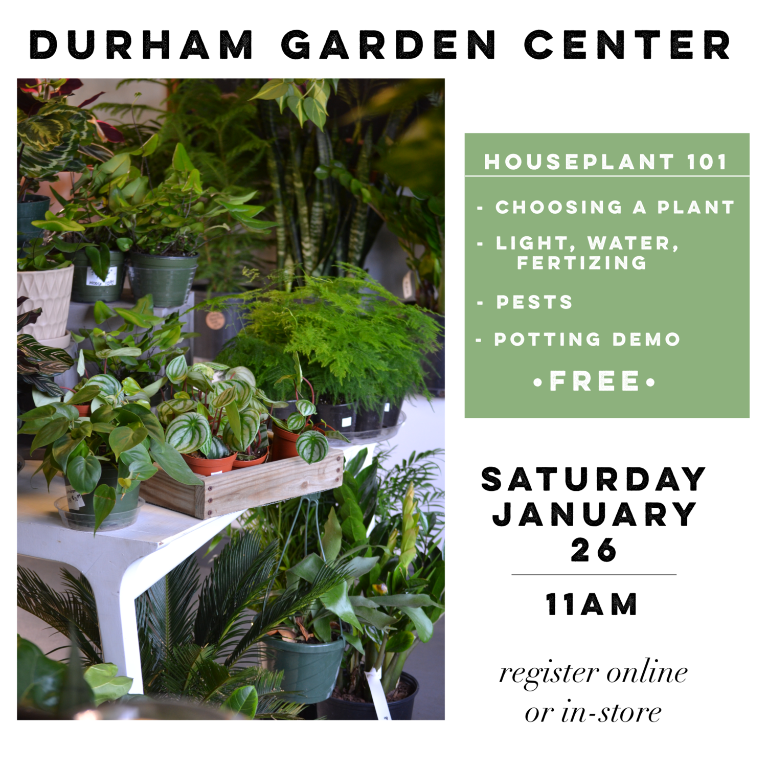 Brilliant Houseplant 101 Durham Garden Center Download Free Architecture Designs Intelgarnamadebymaigaardcom